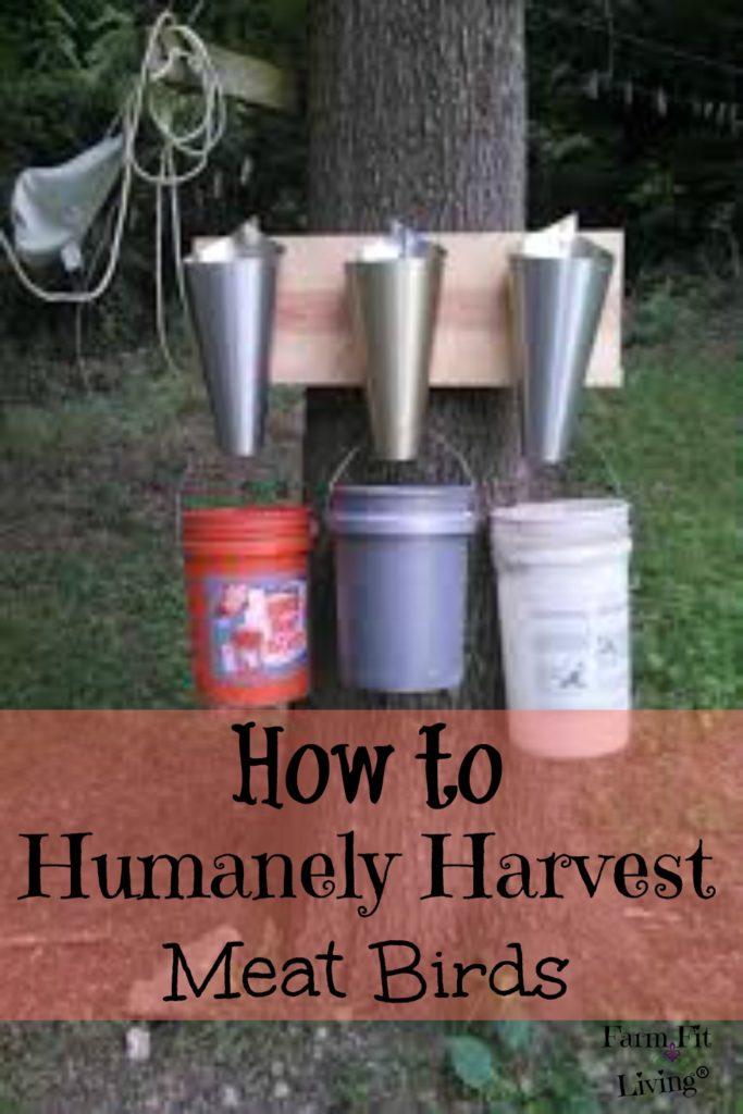 humanely harvest meat birds