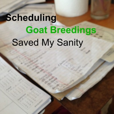 How Scheduling Breedings Saved My Sanity