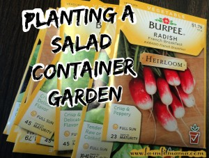 Salad Container Gardening