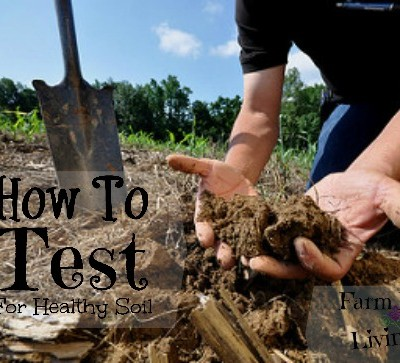 How To Test For Healthy Soil