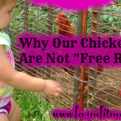 Why My Chickens Are Not Free Range