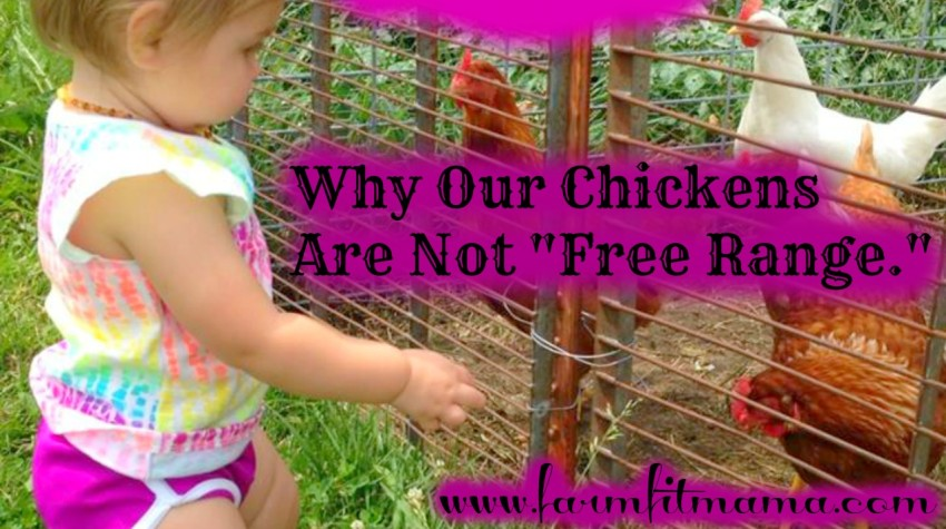 Why Our Chickens Are Not Free-Range