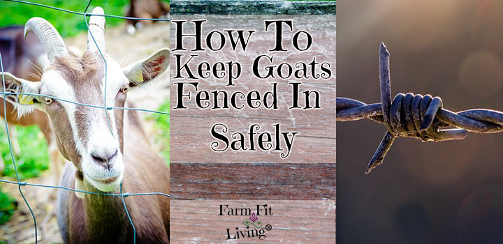 how to keep goats fenced in