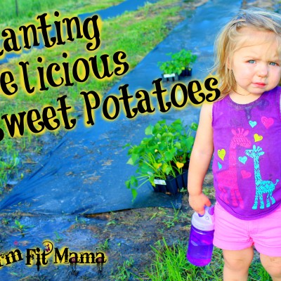 Top 5 Tips for Planting Perfect Sweet Potatoes
