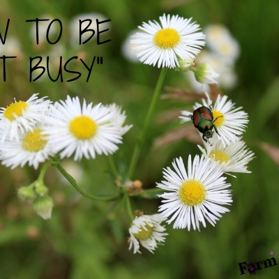 "How to Be ""Not Busy"""