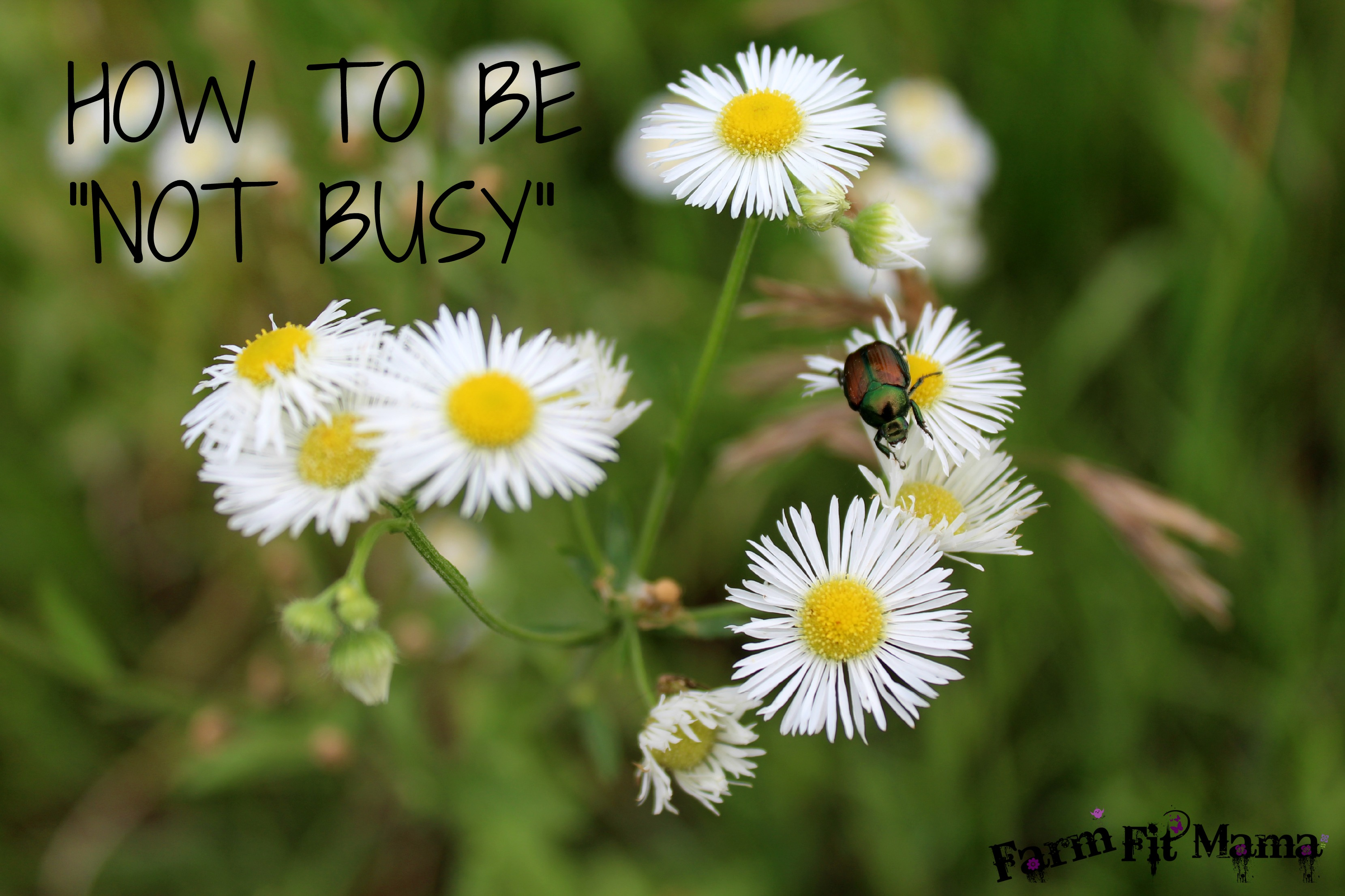 HOW TO BE NOT BUSY