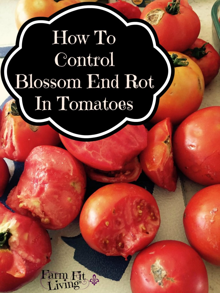 How to Control Blossom End Rot in Tomatoes