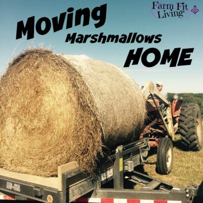 Moving Marshmallows Home