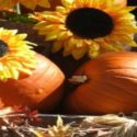 5 Country Family Fun Things To Do This Fall