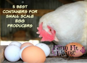 5 Best Egg Containers for Small-Scale Egg Producers