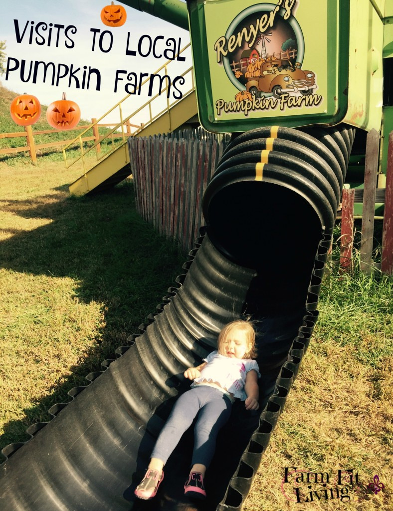 Visits to Pumpkin Farms