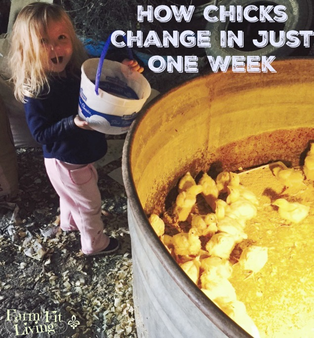 How Chicks Change in Just One Week