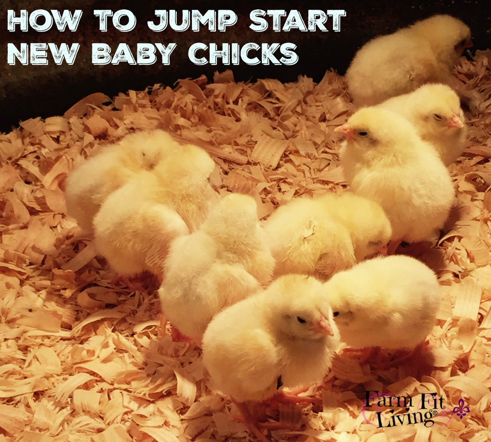 How to Jump Start New Baby Chicks