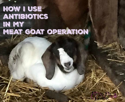 How I Use Antibiotics in my Meat Goat Operation | Farm Fit