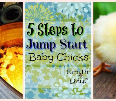 jump start baby chicks