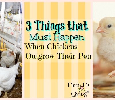 When Chickens Outgrow Their Pen: Three Things that Must Happen