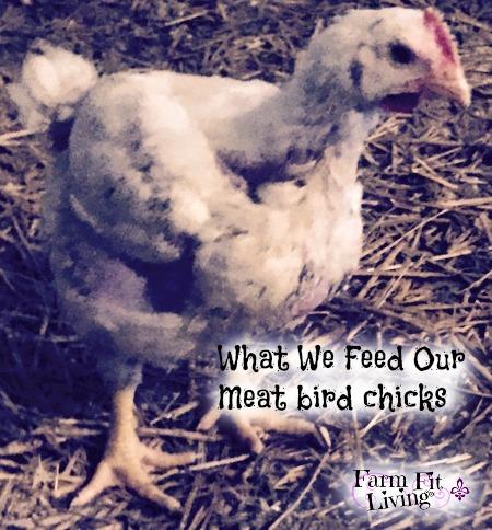 How Chicks Obtain Sustenance