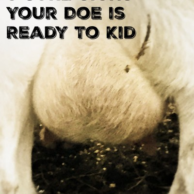 5 Sure Signs Your Doe is Close to Kidding
