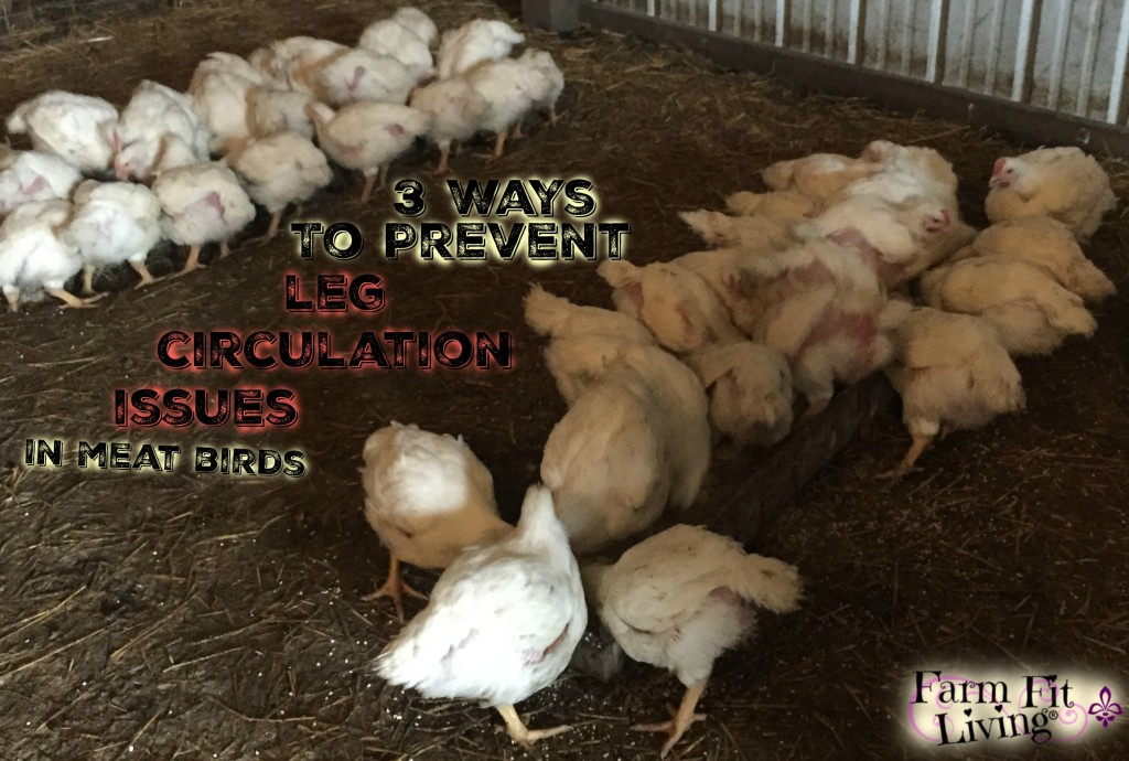 Prevent Leg Circulation Issues in Meat Birds