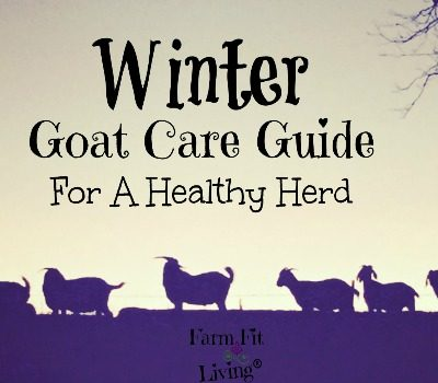 Winter Goat Care Guide for a Healthy Herd