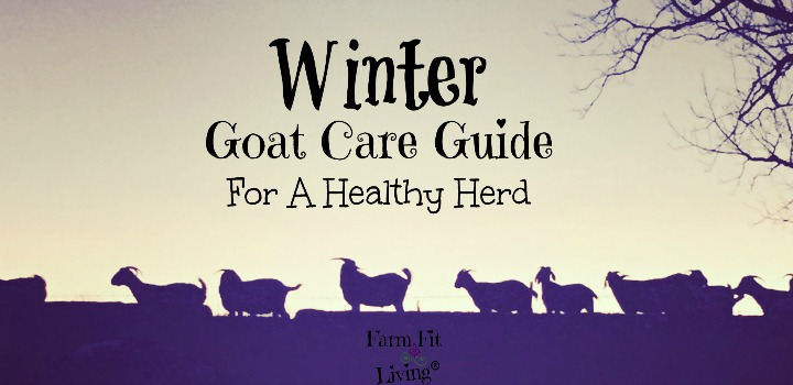 winter goat care guide