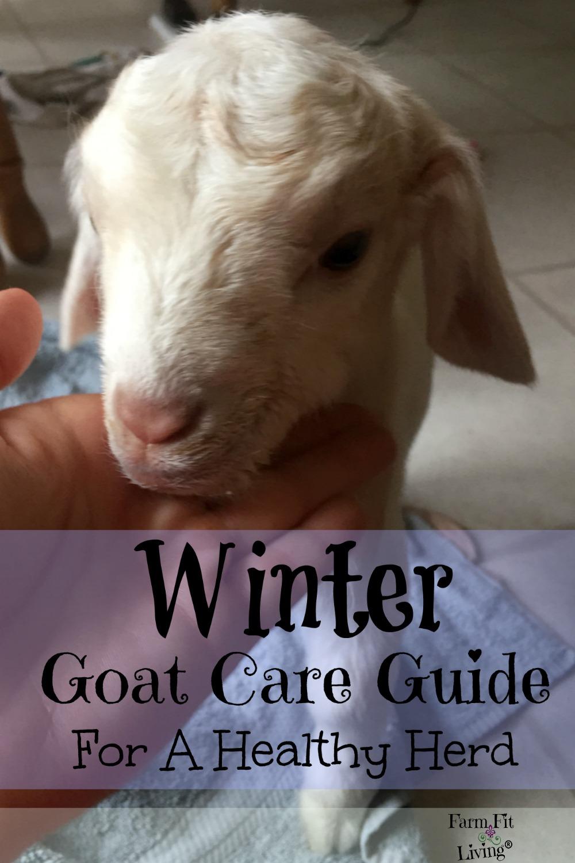 winter goat care guide