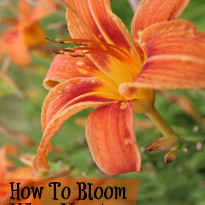 7 Ways to Bloom When You Are Wilting