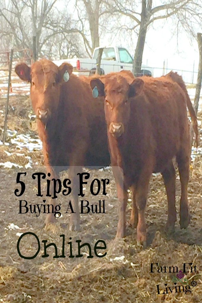 buying a bull online