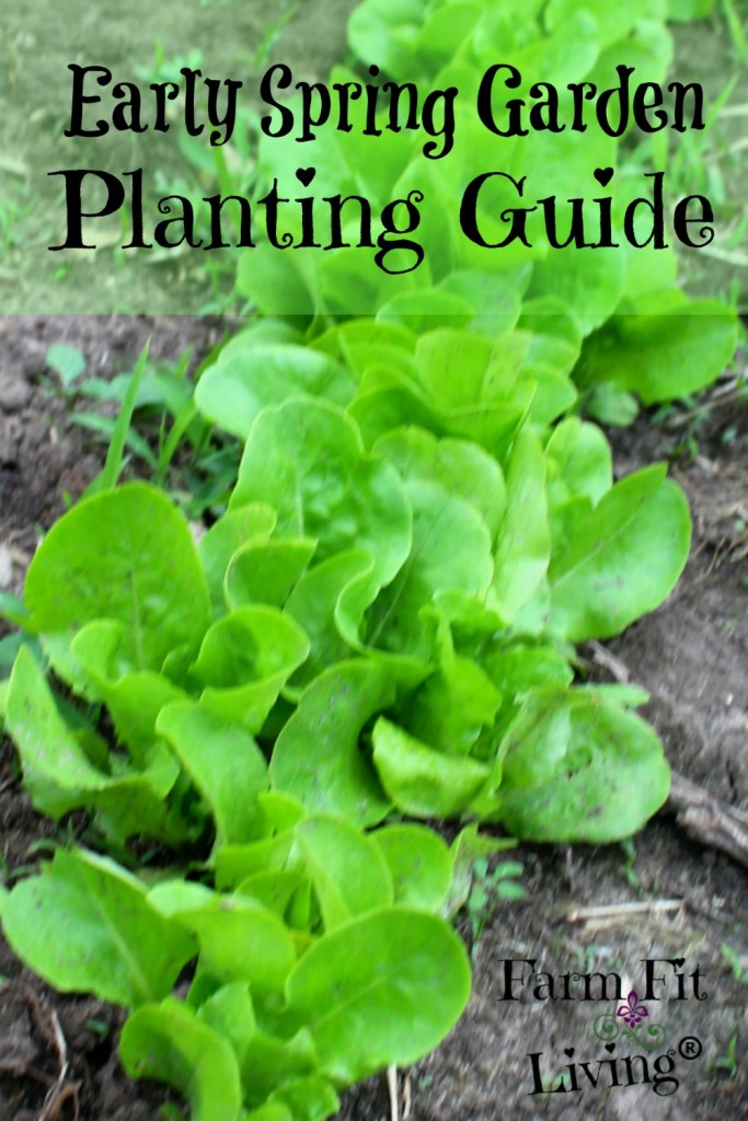 early spring garden planting