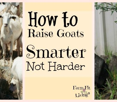 7 Ways to Raise Goats Smarter Not Harder