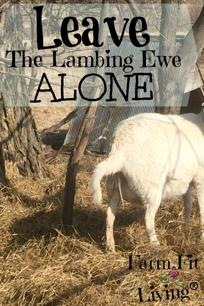 Leave Lambing Ewe