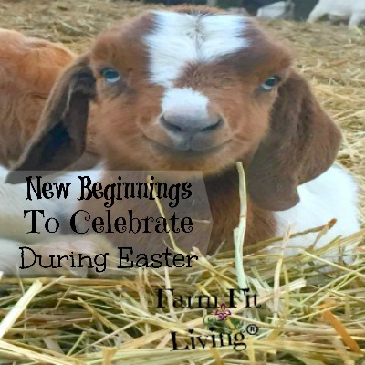 New Beginnings to Celebrate on Easter