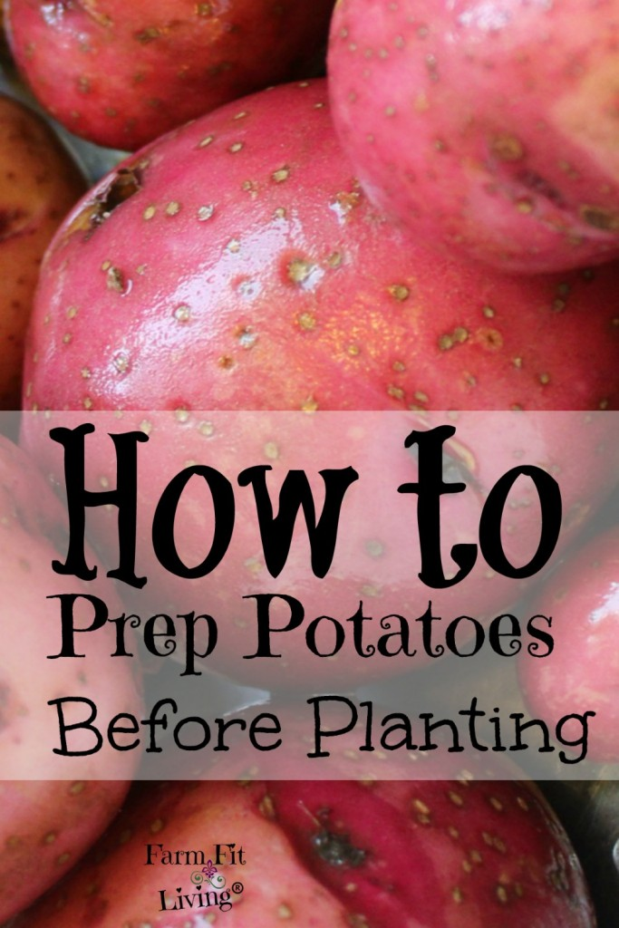 Potato prep how to prepare your spuds for planting for Different ways to prepare potatoes