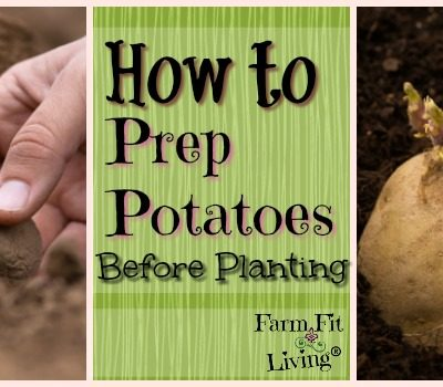 Potato Prep: How to Prepare Your Spuds for Planting