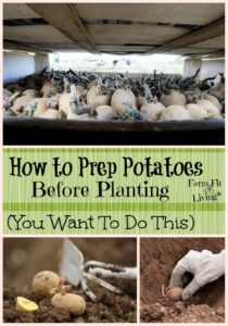 potato prep before planting