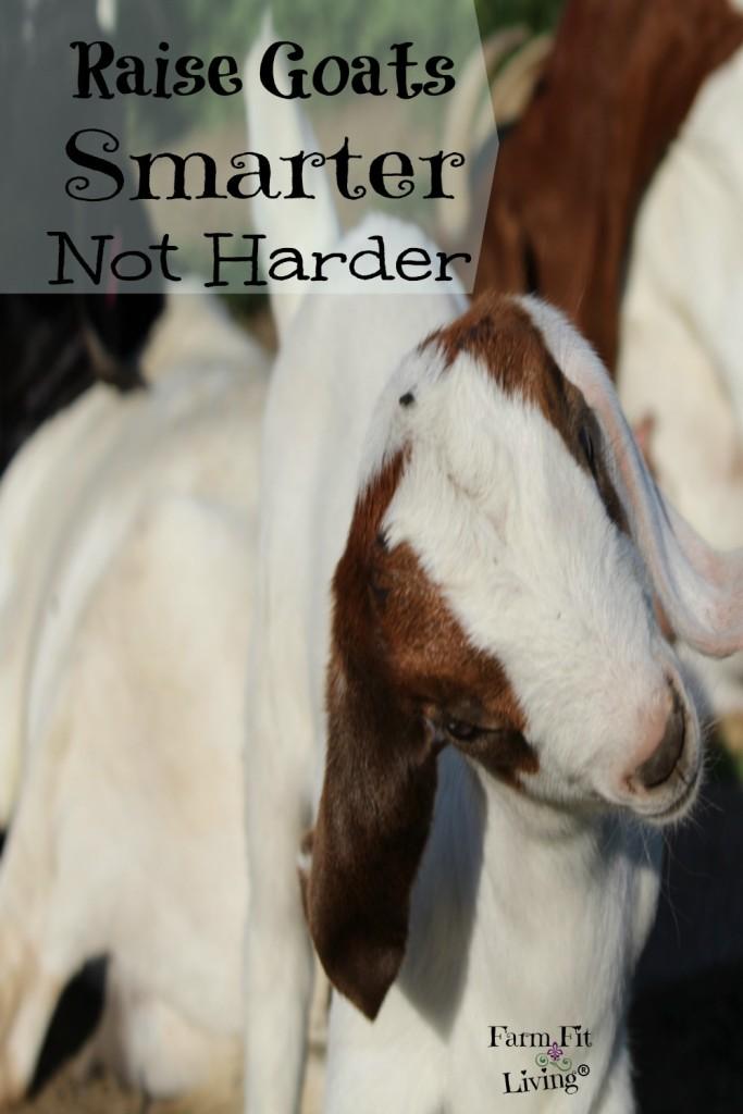 raise goats smarter not harder