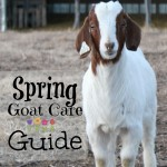spring goat care guide