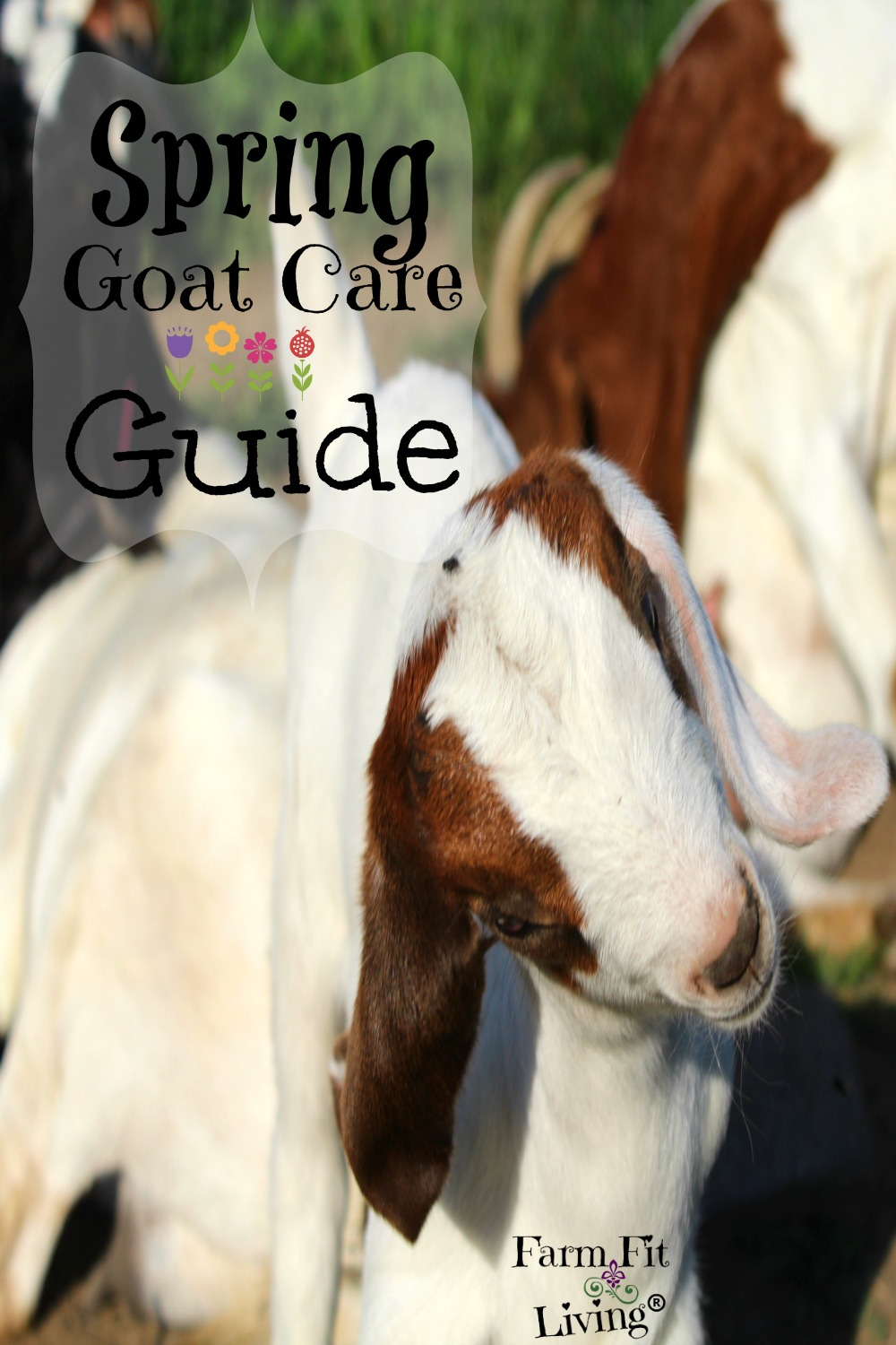 Spring Goat Care Guide | Farm Fit Living
