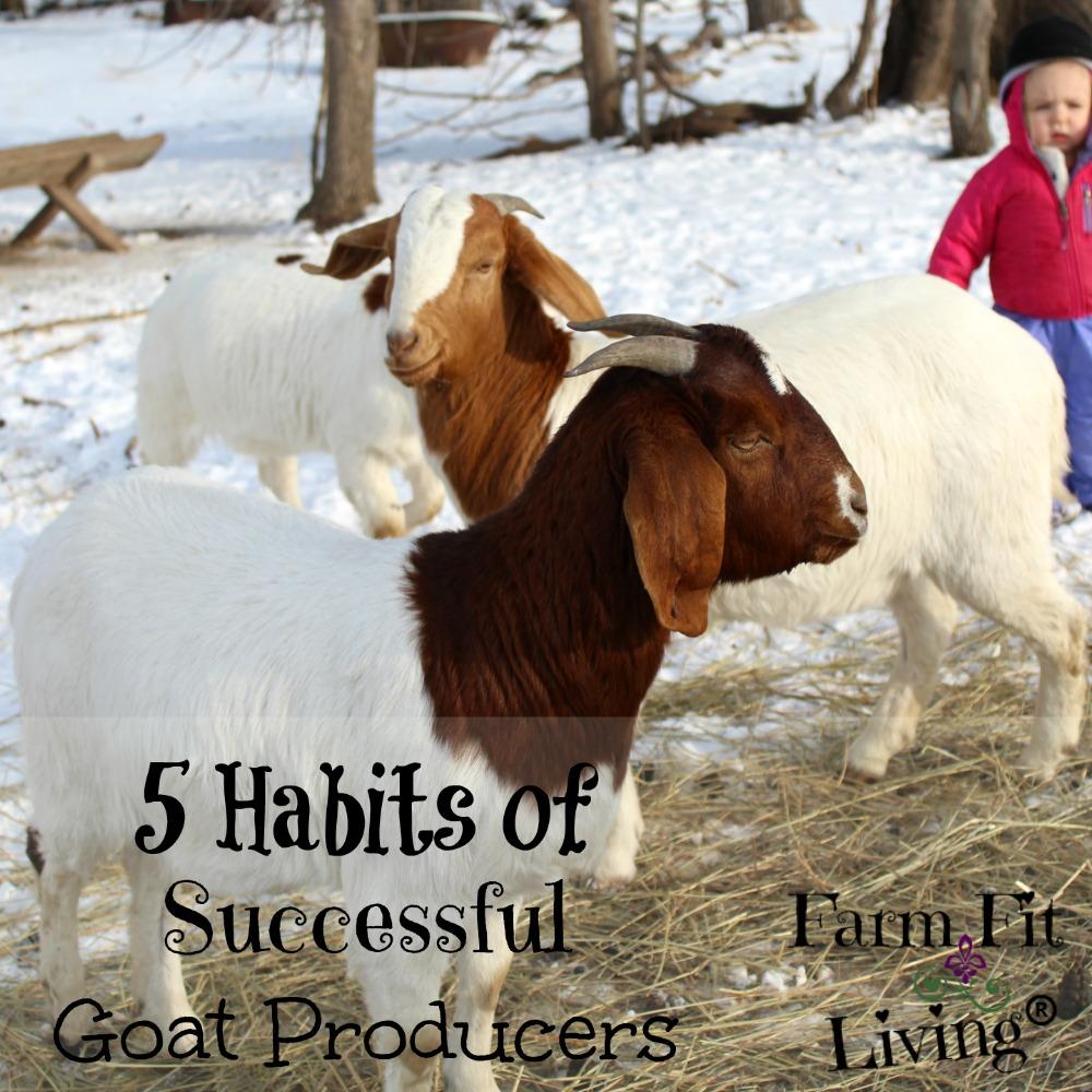 successful goat producers