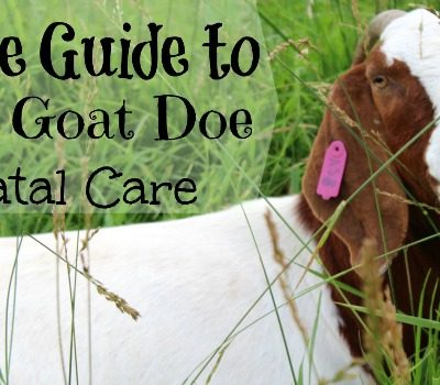 A Simple Guide to Doe Prenatal Care