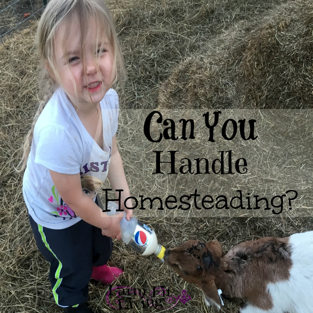handle homesteading