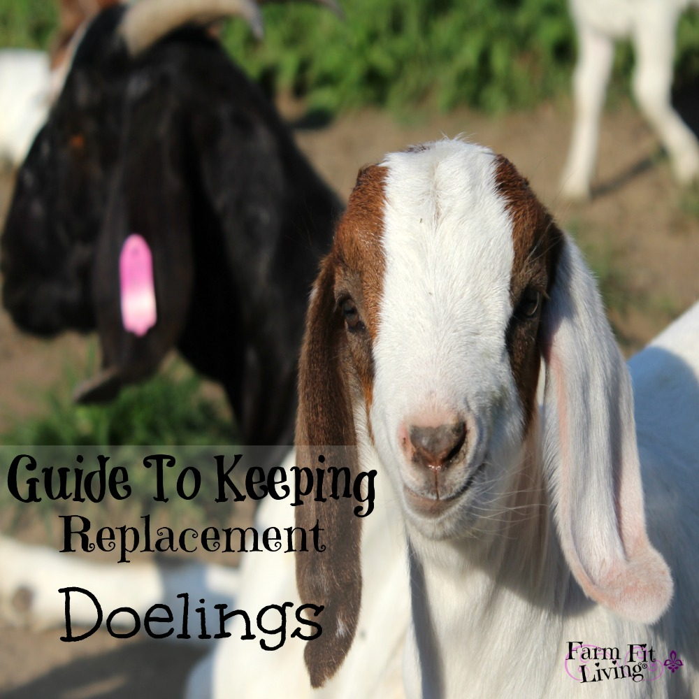 Keeping Replacement Doelings