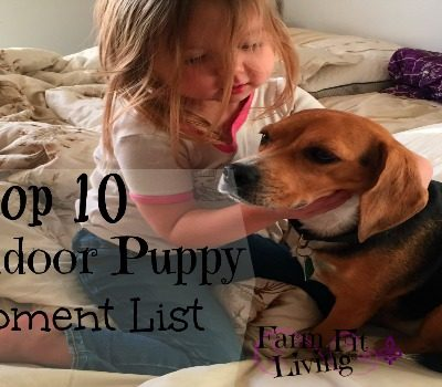Top 10 New Indoor Puppy Equipment List