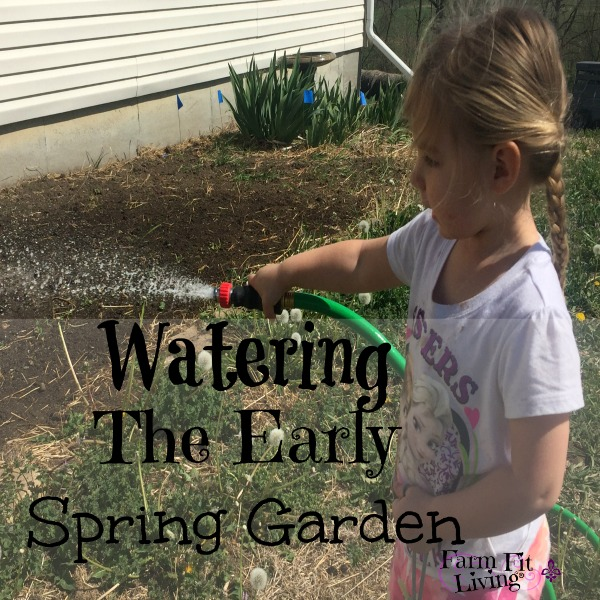watering the early spring garden
