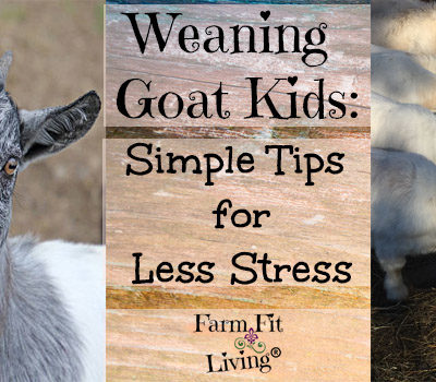 Weaning Kids: Simple Tips for Less Stress in Goat Kids