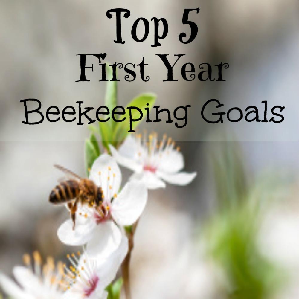 first year beekeeping goals