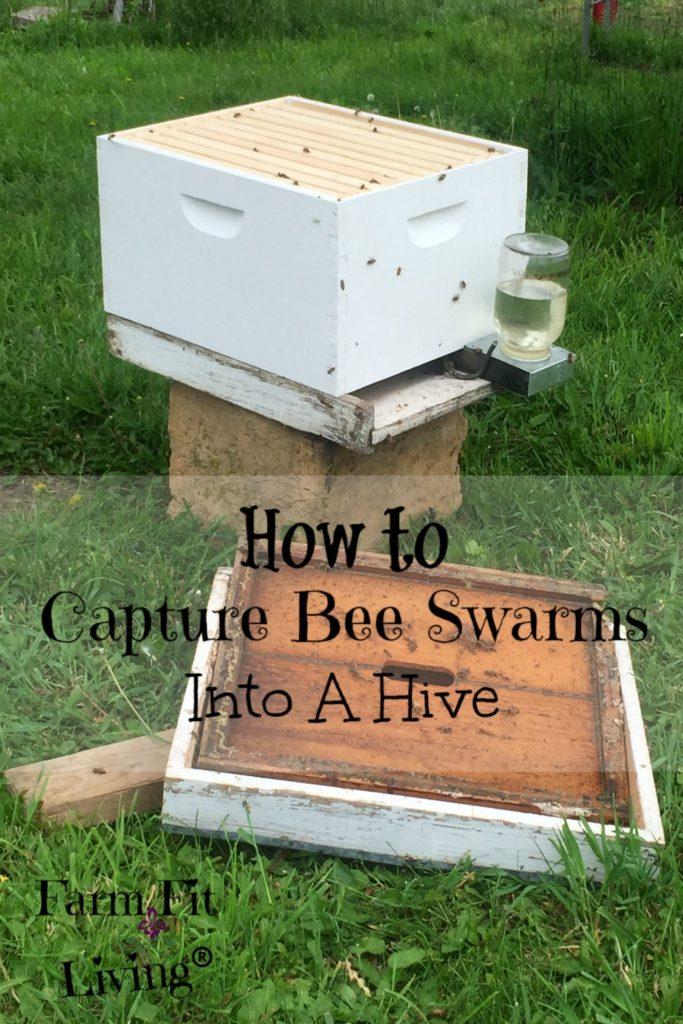 capture bee swarms