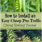 easy cheap pea trellis