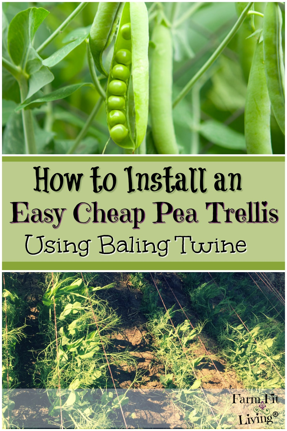 easy cheap pea trellis