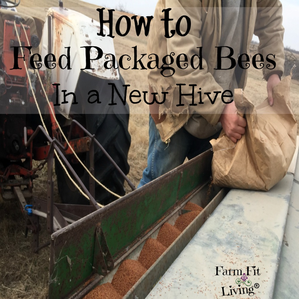 feed packaged bees